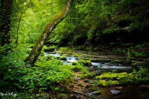 waterfall_streams__green__by_sparkvillage-d53n94q